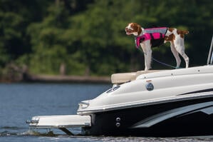 dog-on-boat-lifejacket