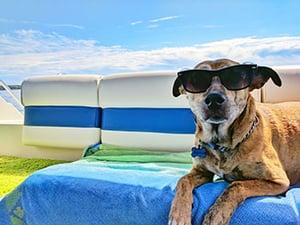 dog-on-boat-sunglasses-splash-350