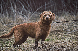 dog-on-leash-hiking-unsplash-350