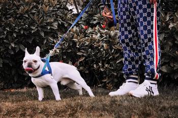 dog-on-leash-walk