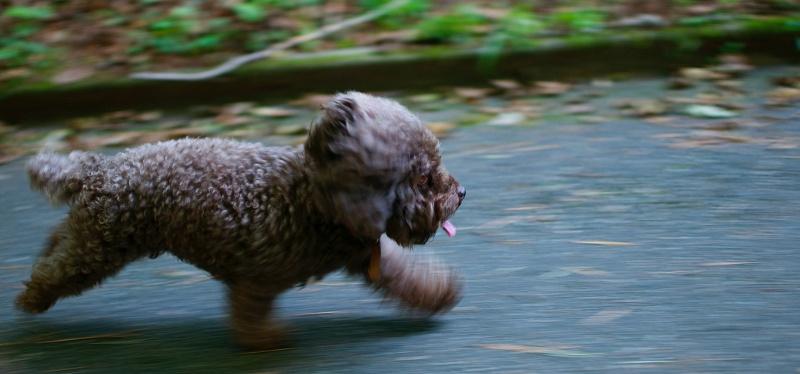 dog-running-offleash-road