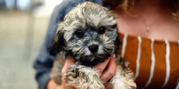 dog-socialization-puppy