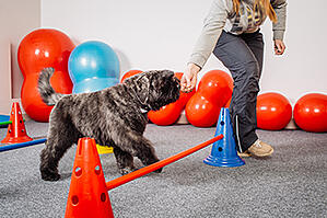 dog agility trainer