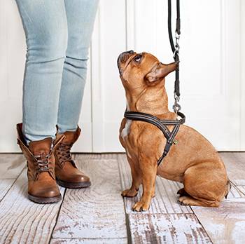 how to train your dog without treats