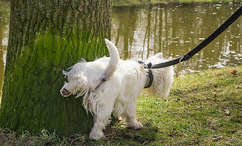 Why You Should Watch Your Dog Pee