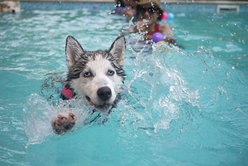 doggie-paddle-dog-swimming