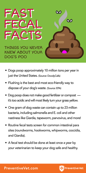 What Your Dog S Poo Can Tell You About Their Health
