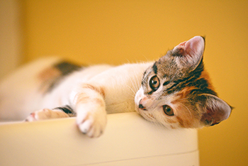 Applying to be a Foster Volunteer and Finding a Foster Cat
