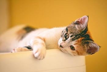 foster-kitten-1