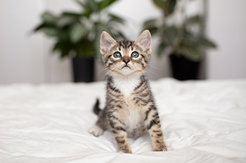Why You Should Consider Fostering a Cat