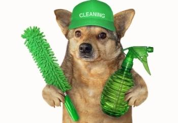 funny dog wearing cleaning hat and holding spray bottle
