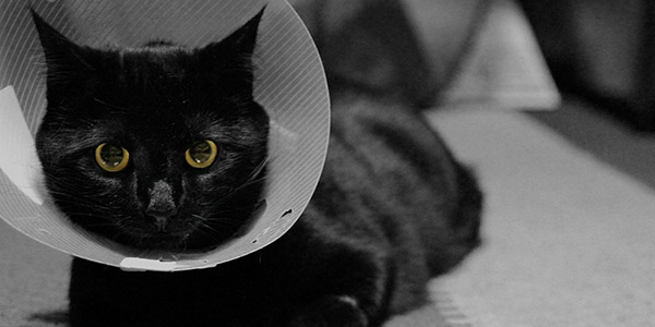 get cat used to wearing cone