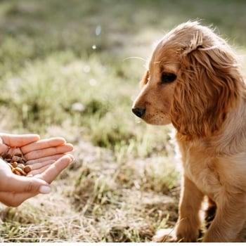 giving a puppy too many treats