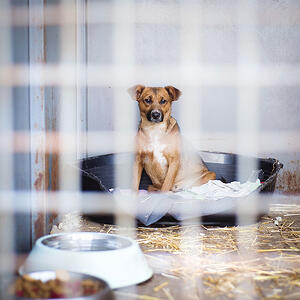 graphicstock-a-dog-in-an-animal-shelter-waiting-for-a-home_rAgv69s3WZ