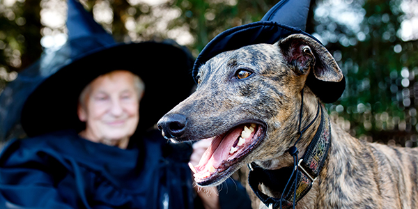 graphicstock-greyhound-dog-and-elderly-lady-in-costume