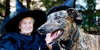 graphicstock-greyhound-dog-and-senior-lady-in-witch-costume_StQZeClHmOW