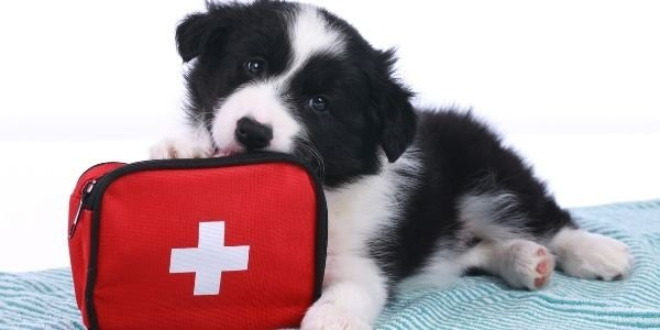 how to make dog first aid kit