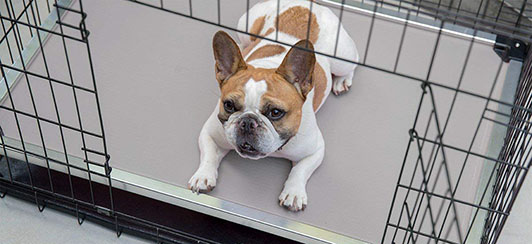 how-to-measure-and-choose-dog-crate