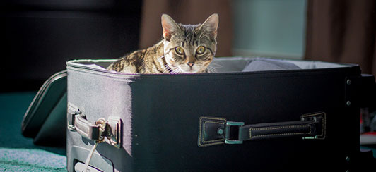 how-to-travel-and-move-with-cats