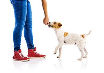 how-to-use-treats-the-right-way-in-dog-training