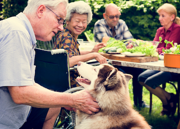 husky being pet by senior man outside by dining table