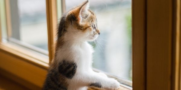 kitten looking at the window standing on sill