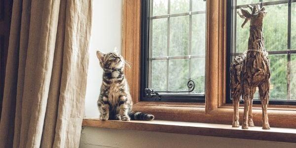 kitten on windowsill cat proofing home-Pix