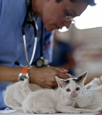 Kitten With Vet