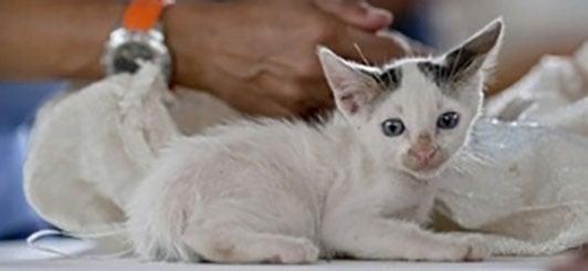 kitten-shots-at-vet