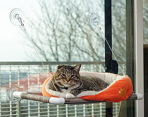 kitty cot cat perch to attach to window