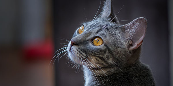 learn about what your foster cat likes