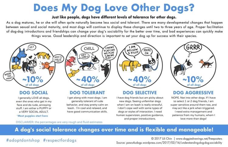 lili-chin-dog-sociability