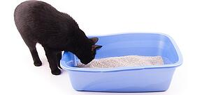 facts about cat poop