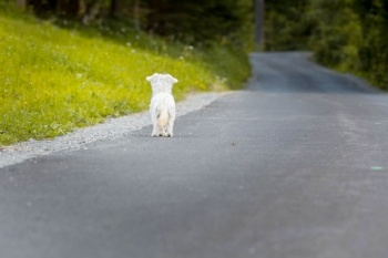 Dog Alone on an Empty Road