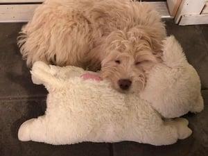 mary berry cuddling snuggle puppy