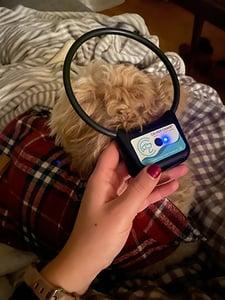 mary-berry-calmer-canine-treatment-350
