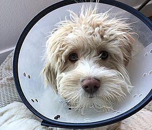 Mary Berry in her Elizabethan collar