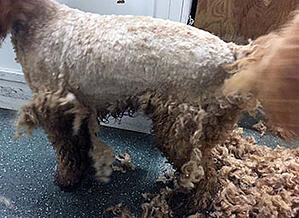 matted-pelted-coat-example-350
