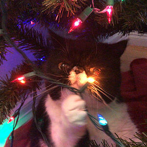mazel the cat in the christmas tree
