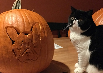 How To Carve A Photo Of Your Dog Or Cat Onto A Pumpkin