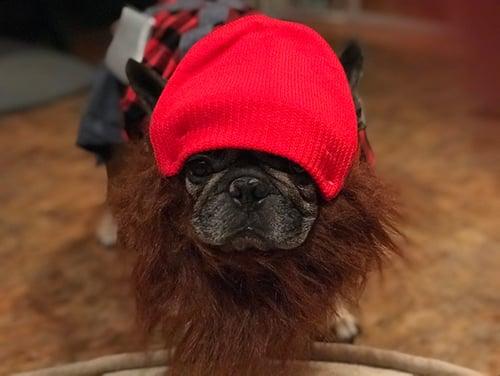 dog hipster costume (or lumberjack)