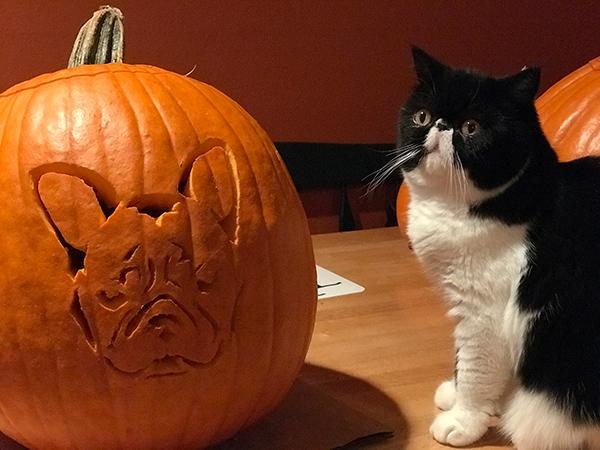 french bulldog Halloween pumpkin stencil