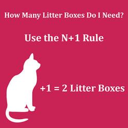 n plus one litter box rule