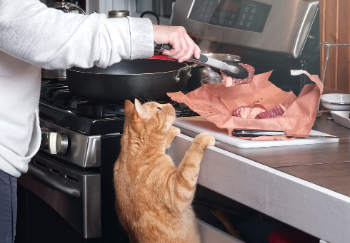orange cat pulling itself up onto counter to try and get meat being cooked