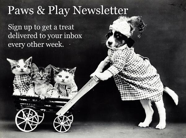 Sign up for the Paws and Play newsletter