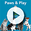 Play Paws & Play episode Dog Daycare: What to Expect and is Your Dog a Good Fit?