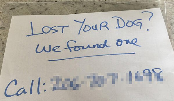 found-lost-dog-poster