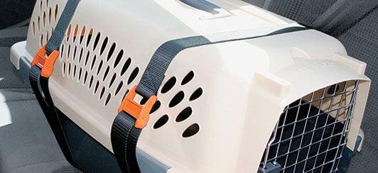 pet-kennel-carrier-straps