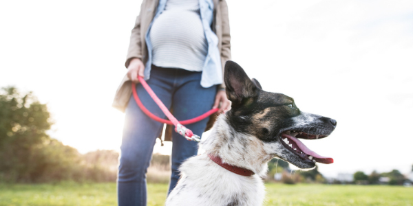 preparing your pets for when a baby arrives