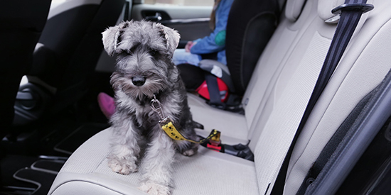 preventing travel sickness for dogs